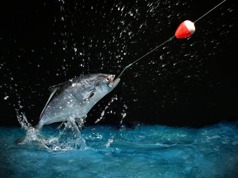 145557-catching-a-big-fish-at-night